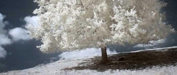 arbre_blanc